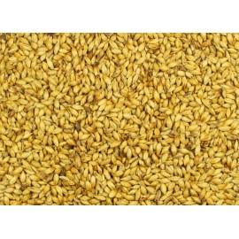 SŁÓD CHATEAU CARA GOLD CASTLE MALTING 1 kg